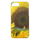 Sunflowers in Bloom iPhone 8/7 Case