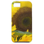 Sunflowers in Bloom iPhone SE/5/5s Case