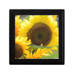 Sunflowers in Bloom Keepsake Box