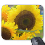 Sunflowers in Bloom Mouse Pad