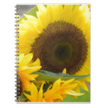 Sunflowers in Bloom Notebook