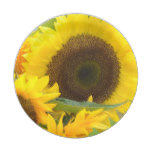 Sunflowers in Bloom Paper Plate