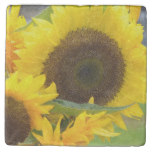 Sunflowers in Bloom Stone Coaster