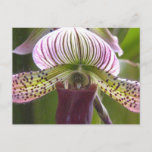 Unique Orchid Postcard