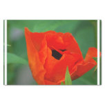 Vibrant Orange Poppy Tissue Paper