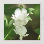 White Bleeding Heart Invitation