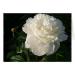 White Double Peonies Card