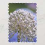 White Flowering Allium Invitation
