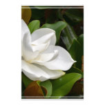 White Magnolia Stationery