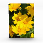 Yellow Coreopsis Acrylic Award