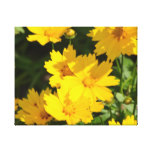 Yellow Coreopsis Canvas Print
