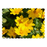 Yellow Coreopsis Card