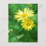 Yellow Flowers Postcard